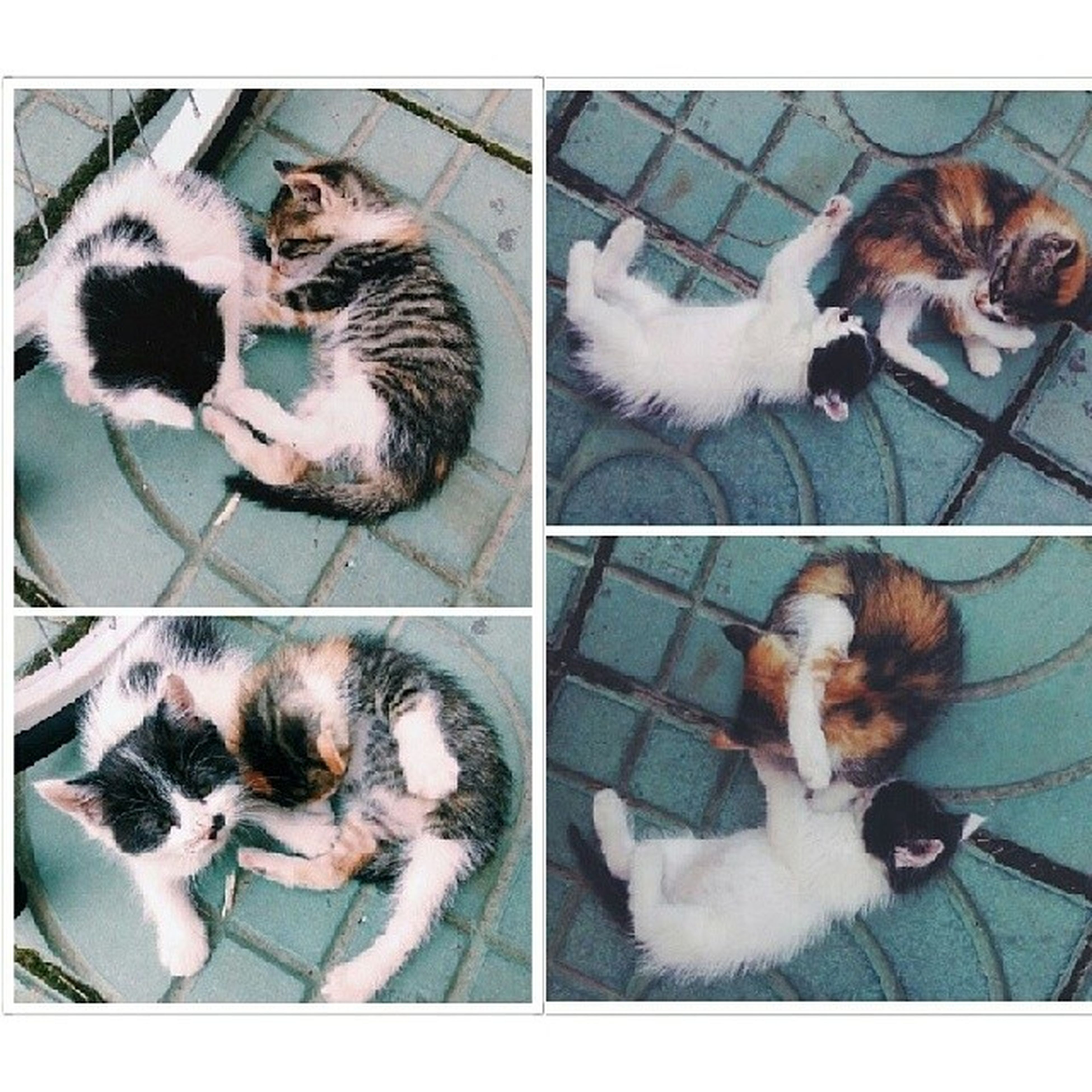 domestic animals, animal themes, pets, mammal, indoors, domestic cat, cat, two animals, one animal, togetherness, relaxation, feline, lying down, resting, high angle view, young animal, three animals, transfer print, auto post production filter, kitten