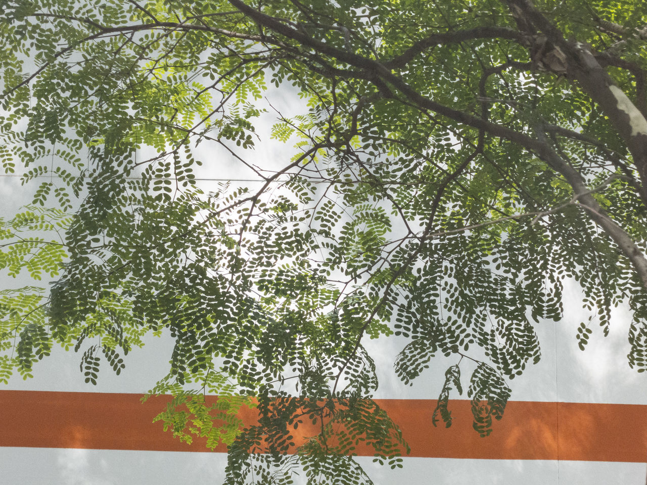tree, growth, branch, real people, day, green color, nature, outdoors, one person, close-up, beauty in nature, people