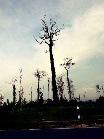 Nature Tree Landscape :)