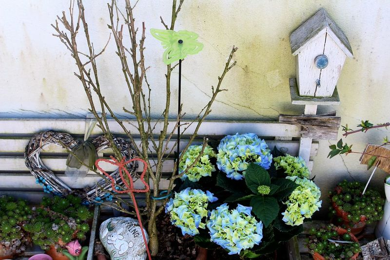 Plant Flower Nature Green Color Outdoors Fioritura Fiori Ortensie Ortensia Hydrangea And Green Hydrangea Flower Hydrangea Flowers Beauty In Nature