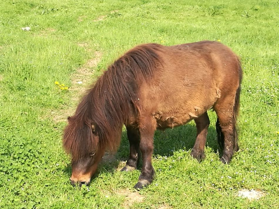 One Animal Green Color Pony No People Outdoors Animal Themes Factory Zone