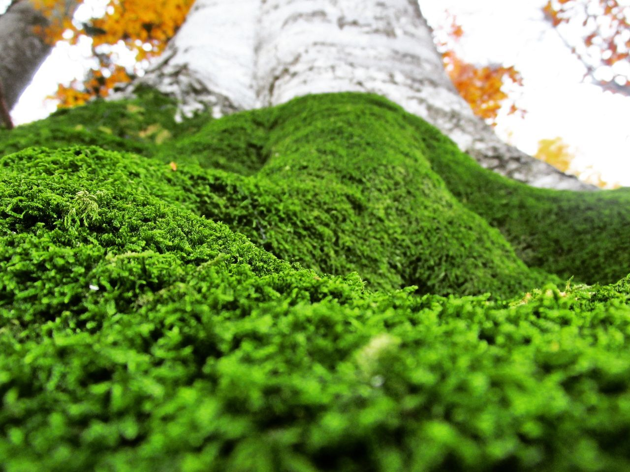 green color, nature, moss, selective focus, no people, growth, day, beauty in nature, outdoors, tree, close-up, grass, tea crop, freshness