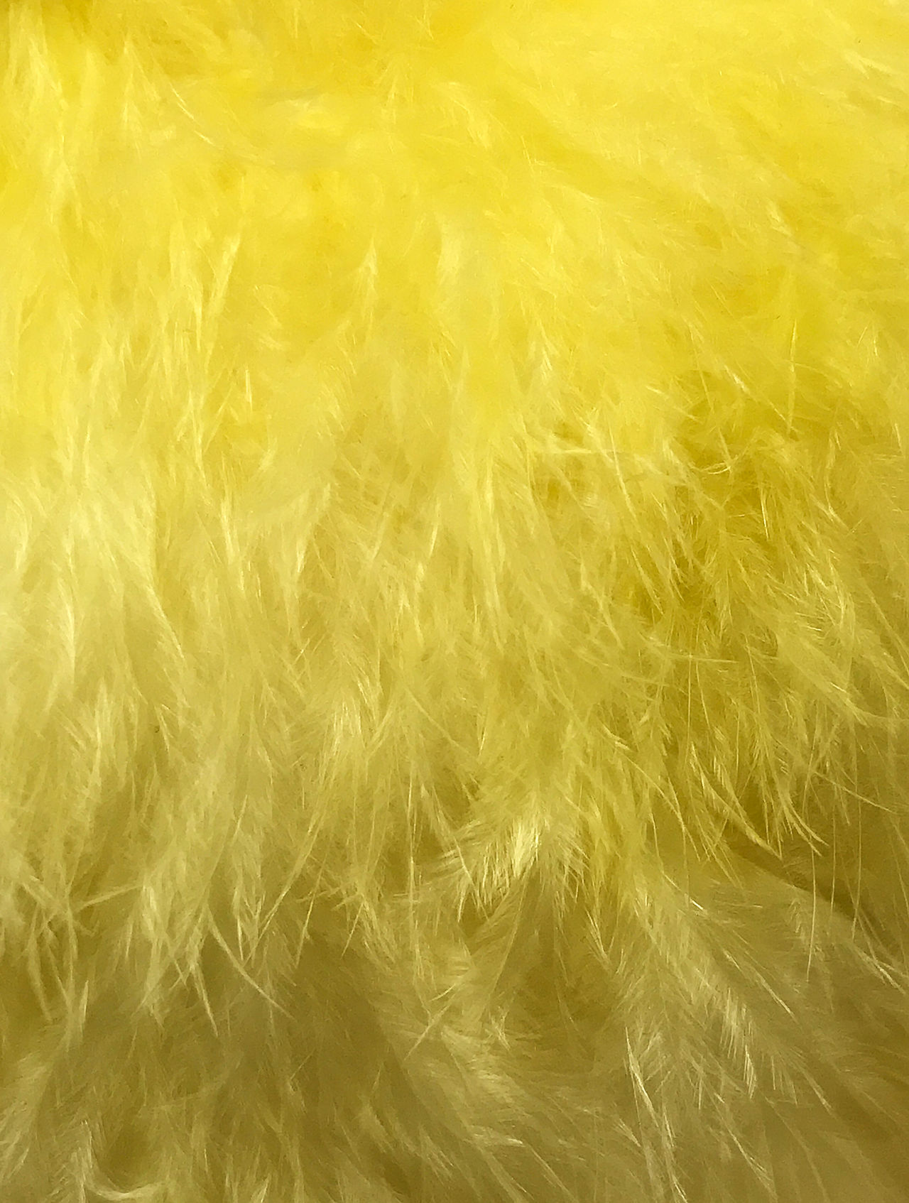 feathers photographed as texture and background Abstract Background Cloth Color Creative Decorative Fabric Feather  Feathers Fiber Fluffy Luxury Natural Pattern Soft Textile Texture Winter