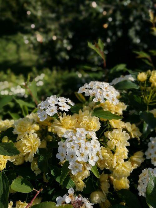 Nature Flower Beauty In Nature Plant Freshness Fragility Flower Head