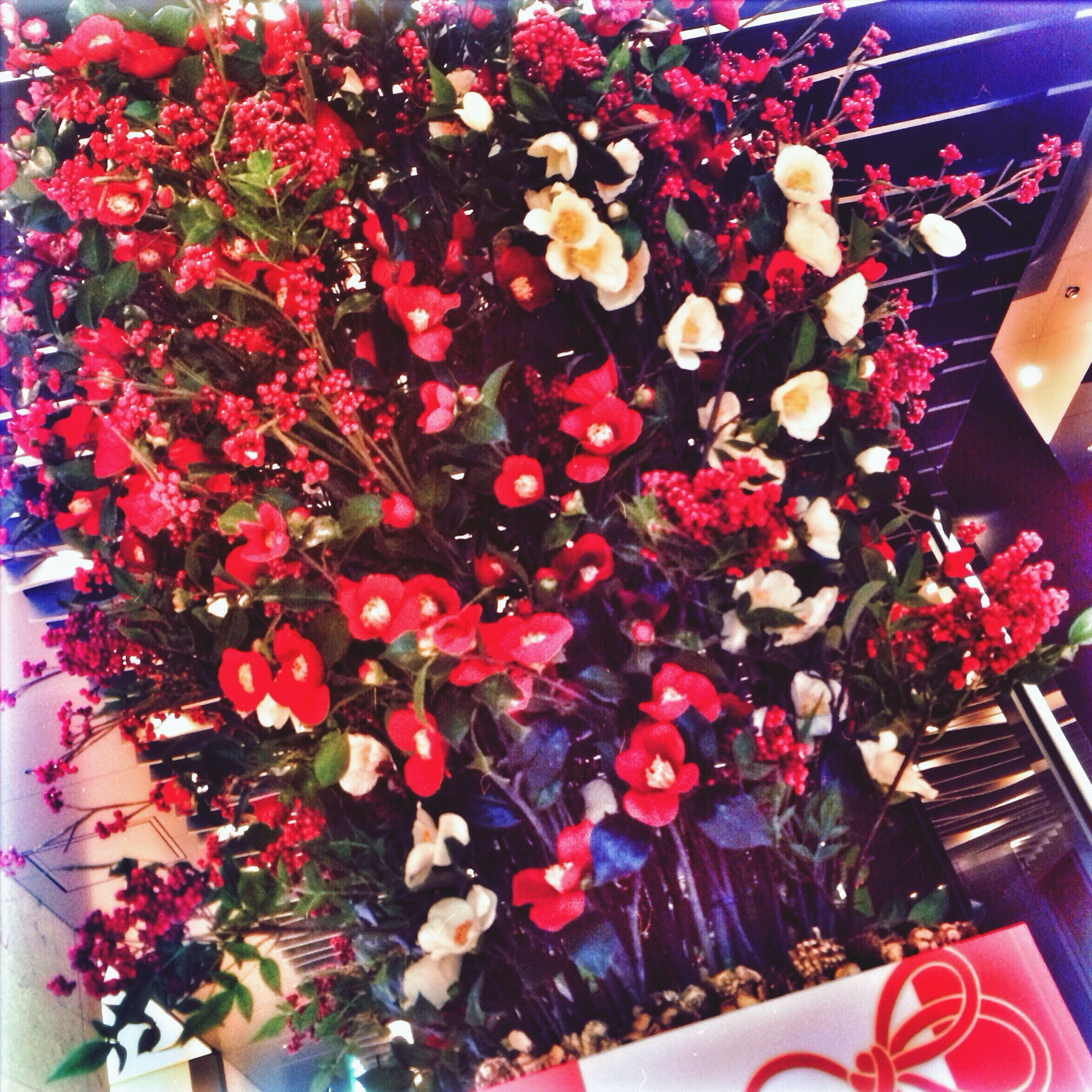 indoors, decoration, high angle view, flower, variation, red, pink color, multi colored, celebration, abundance, close-up, choice, christmas, large group of objects, freshness, no people, bouquet, still life, decor, hanging