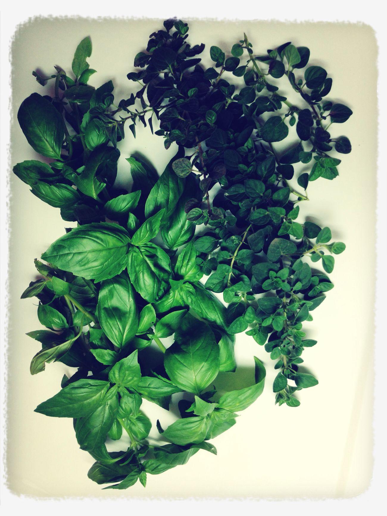 Flowers,Plants & Garden Herbs H E R B A L I S T. Natural Beauty