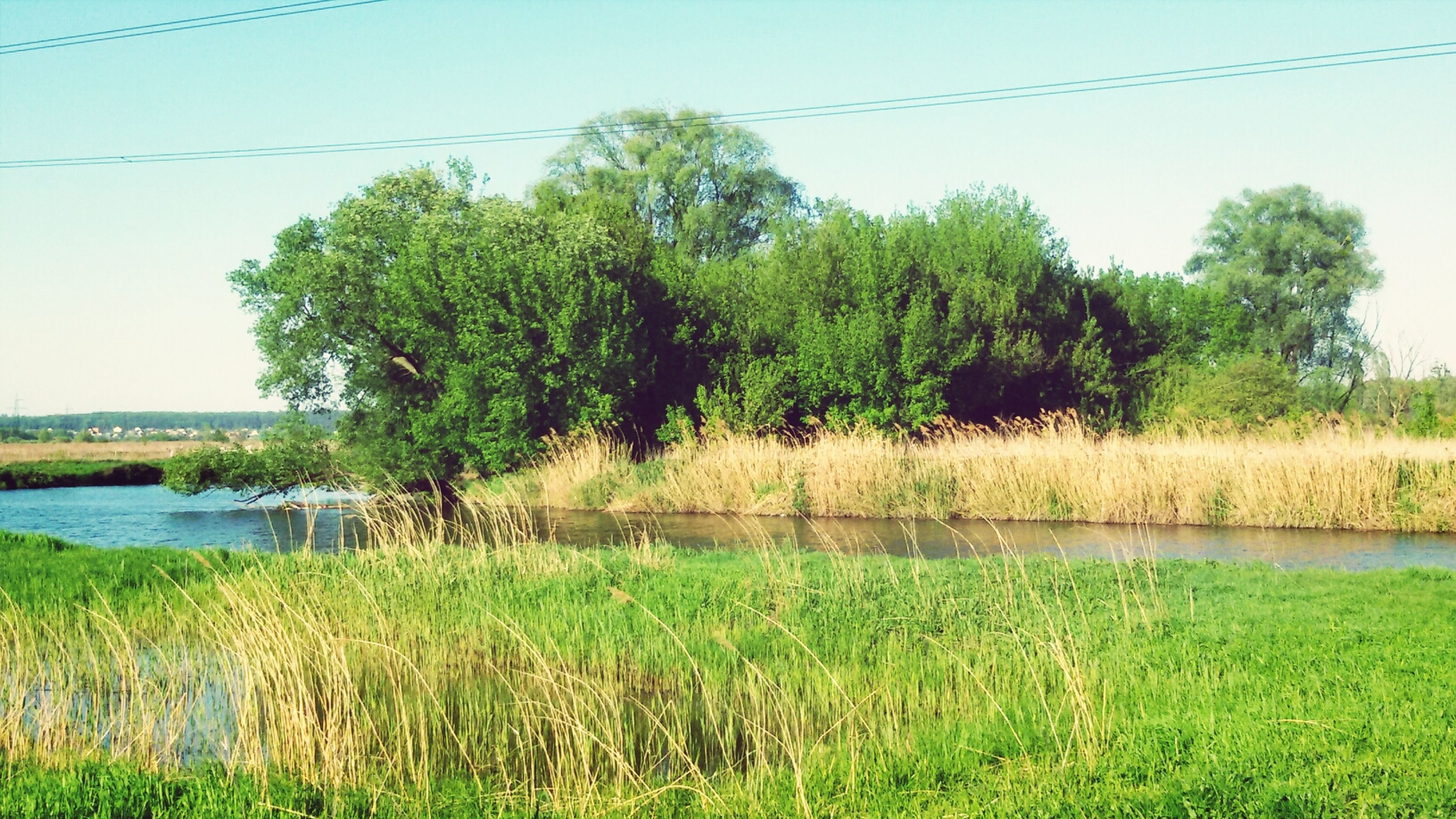 water, grass, clear sky, green color, tree, tranquility, tranquil scene, growth, lake, nature, beauty in nature, scenics, green, plant, river, field, reflection, landscape, day, countryside