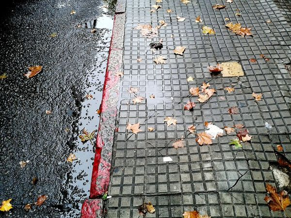 Vereda en Otoño ( Sidewalk in Autumn) City Taking Photos Photo EyeEm Foto The Street Photographer - 2015 EyeEm Awards