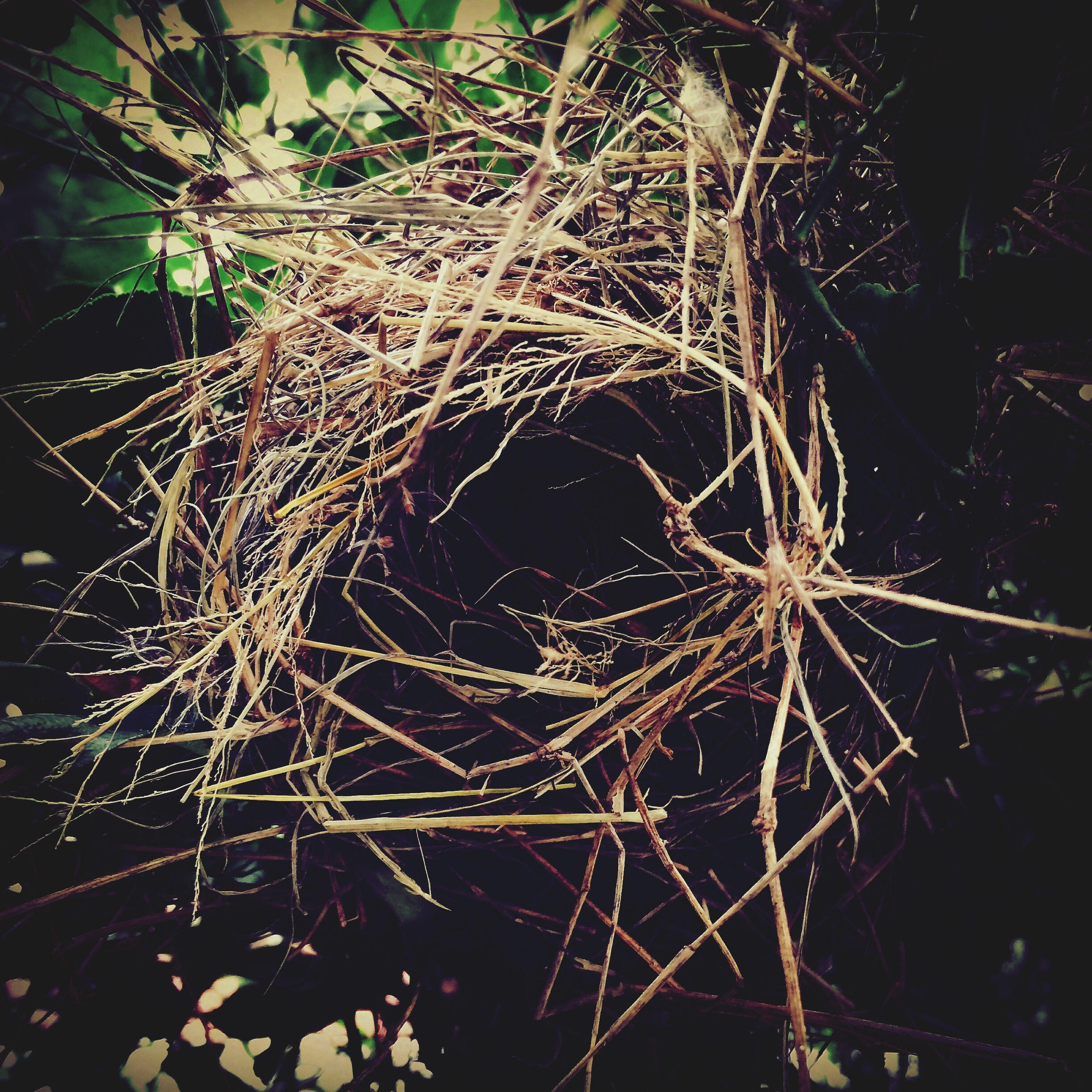 Nest Home Lifeinwaiting