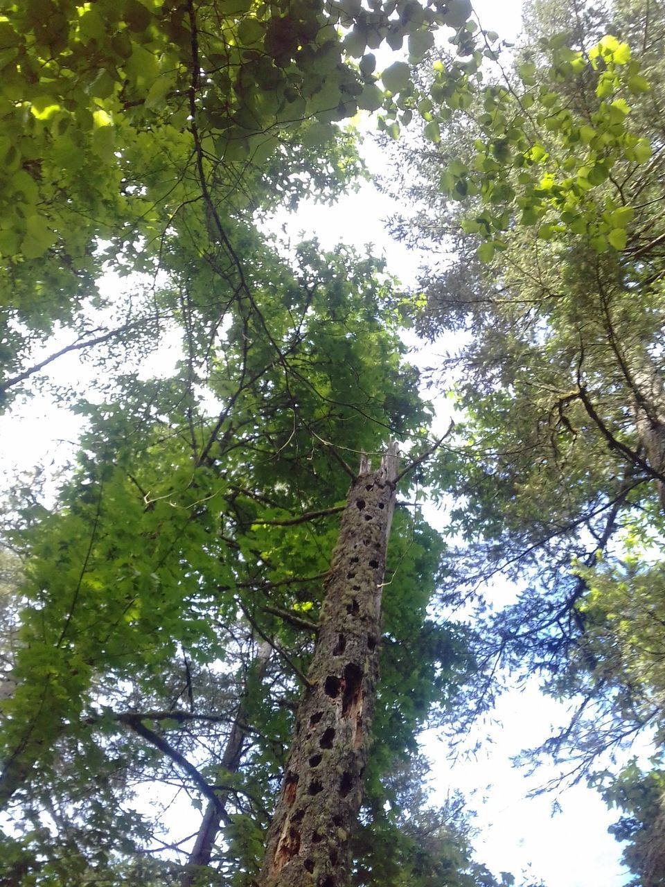 tree, low angle view, growth, tree trunk, nature, branch, green color, beauty in nature, day, no people, forest, outdoors, tranquility, bamboo - plant, sky