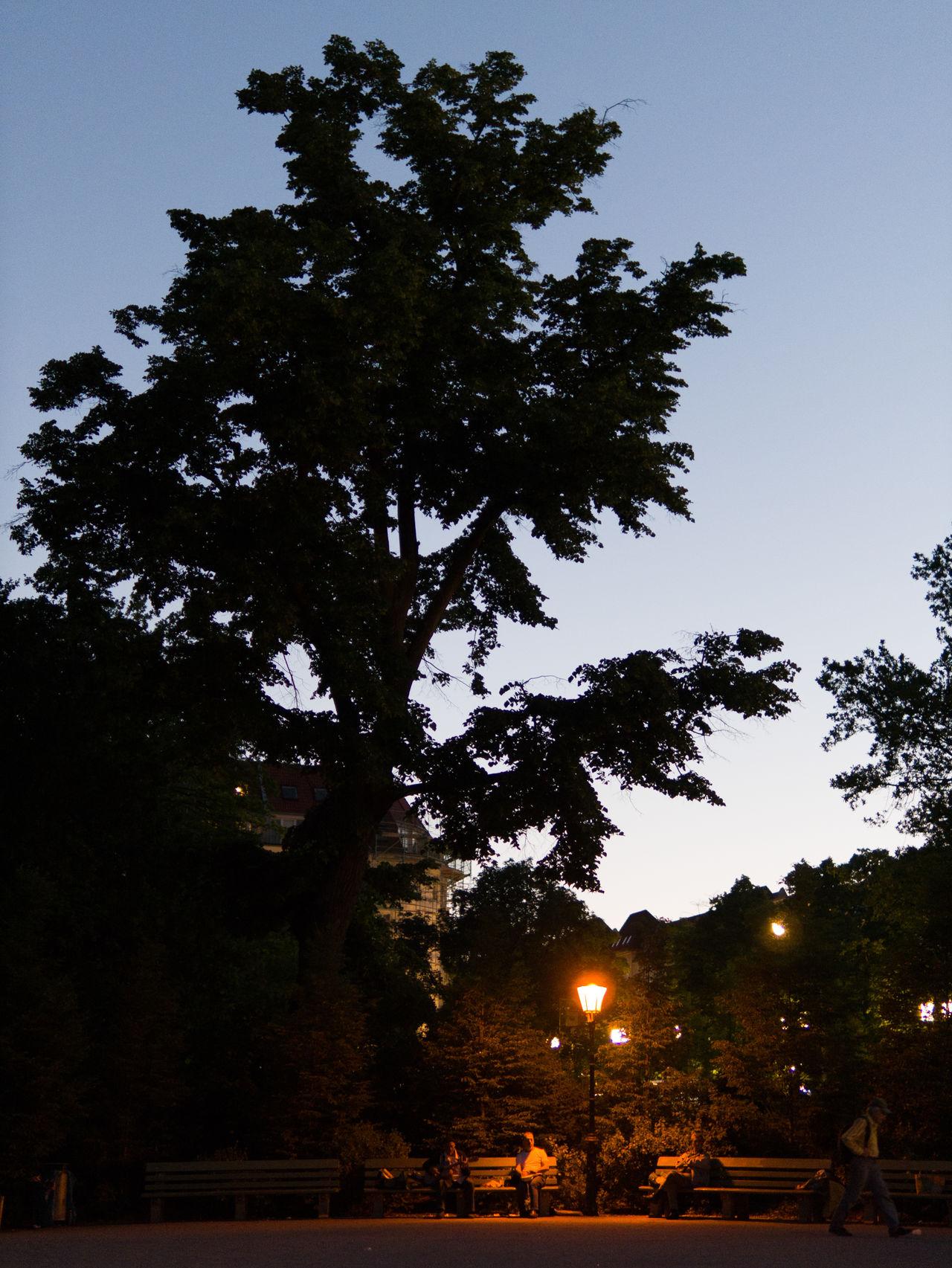 Lietzensee LietzenseePark Berlin Berliner Ansichten Gitarre Musiker Trommler Gitarrist Abend Abendstimmung Abenddämmerung Drum Dunkel Monochrome Minimalism Minimal Minimalobsession Musik Illuminated Bank Abends Rural Scene Park Nature