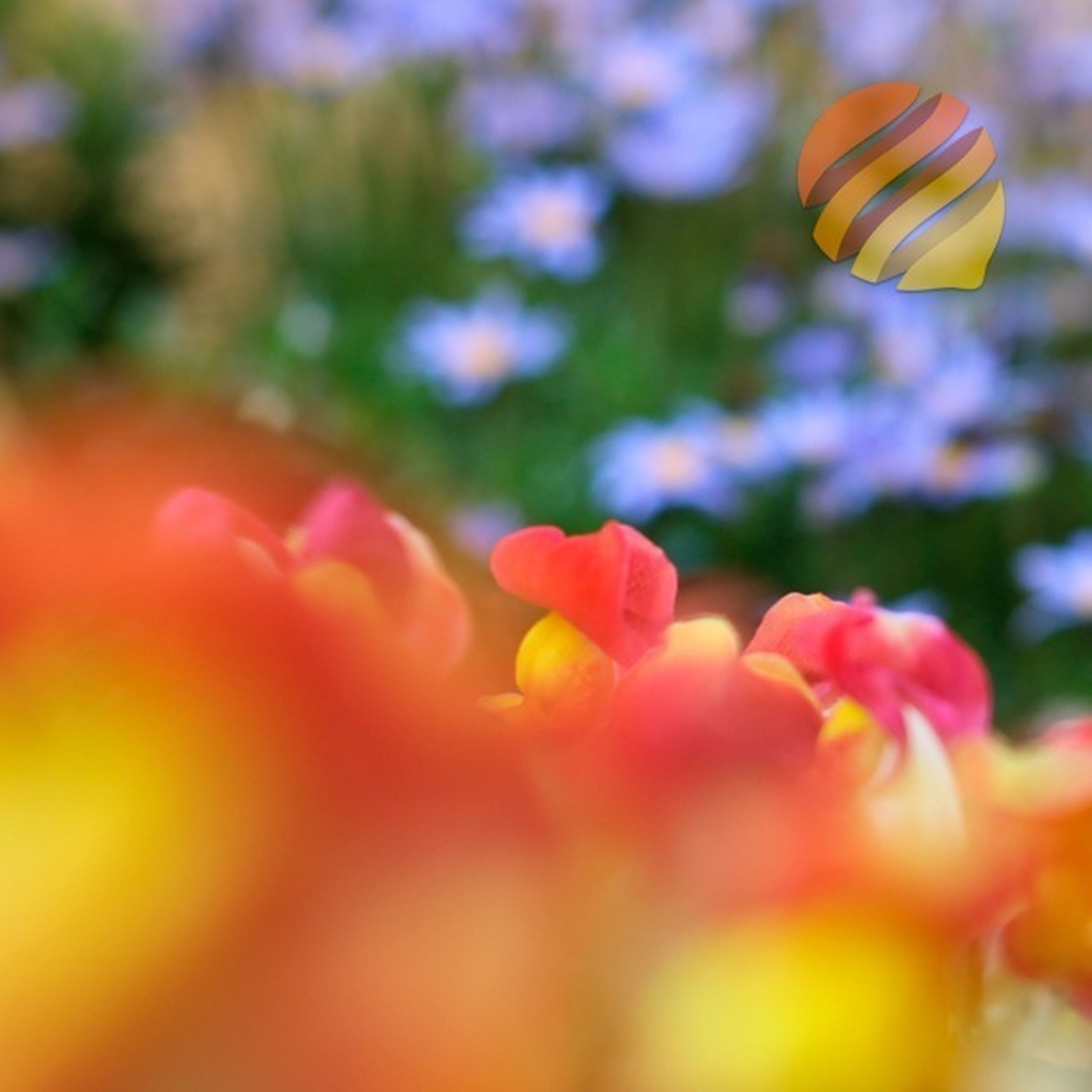 flower, petal, fragility, focus on foreground, freshness, growth, beauty in nature, selective focus, close-up, yellow, flower head, blooming, nature, plant, park - man made space, in bloom, outdoors, day, no people, multi colored