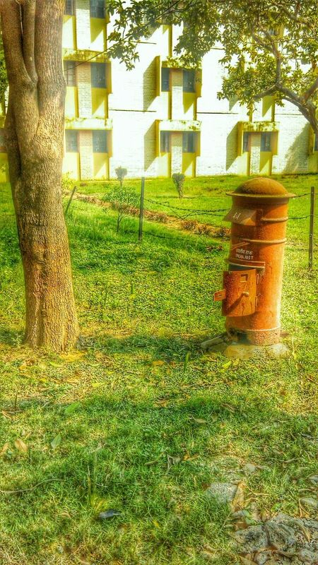 @selfcaptured Green Green Green!  Nature HDR Urban EyeEm Best Shots - Nature Hugging A TreeTreesLetter_postbox ... Postbox