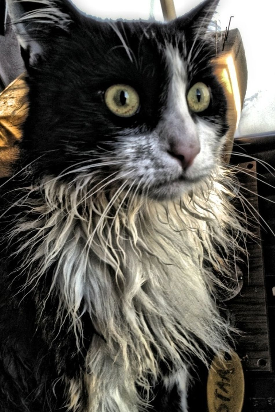 The ship's cat went for an unintentiional swim this morning and was none to happy about it! Portrait