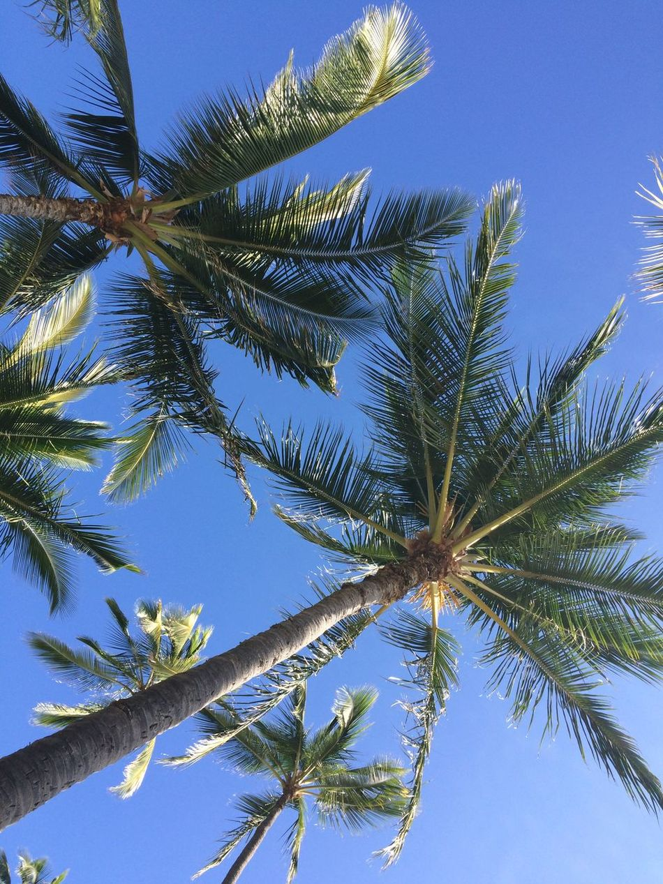 Beautiful stock photos of jamaica, , Clear Sky, Day, Low Angle View