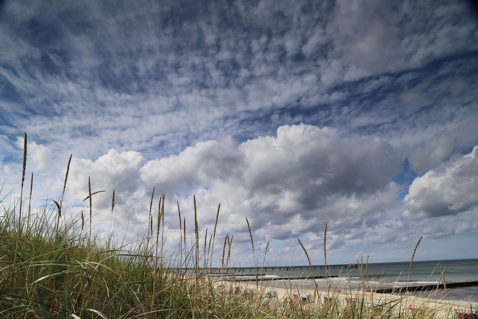 Beach Beauty In Nature Cloud - Sky Day Grass Growth Nature No People Outdoors Scenics Sea Sky Tranquil Scene Tranquility Water