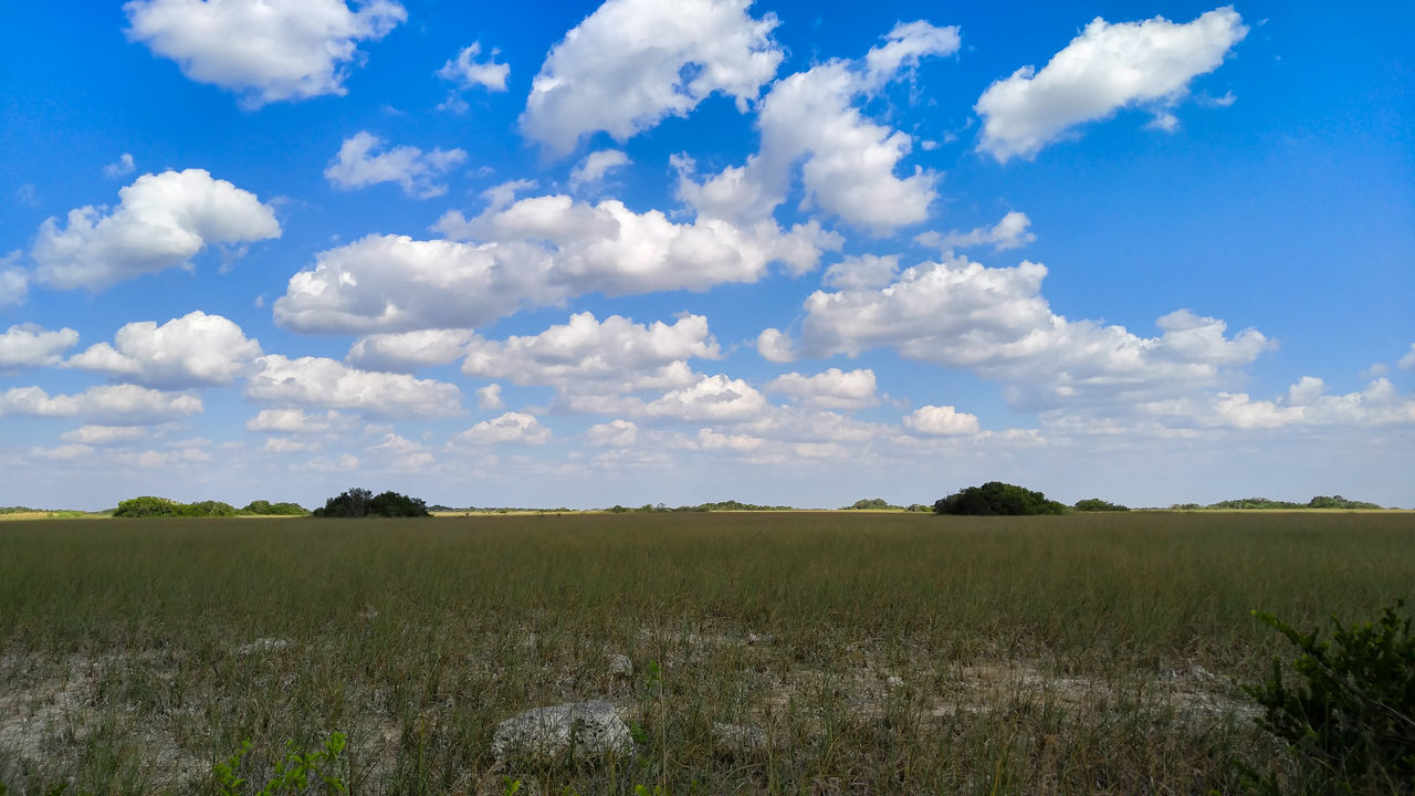 Cloud Clouds Clouds And Sky Cloudscape Everglades  Everglades National Park Everglades, Florida Evergladesnationalpark Explore Miami Miami, FL National Park National Park Collection National Parks Nature Nature Photography Nature_collection Park Shark Valley Shark Valley Observation Tower South Florida