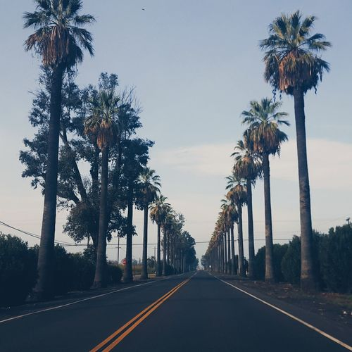 Forever Palm Trees Silence Of Nature Open Roads Confidence  Outcast