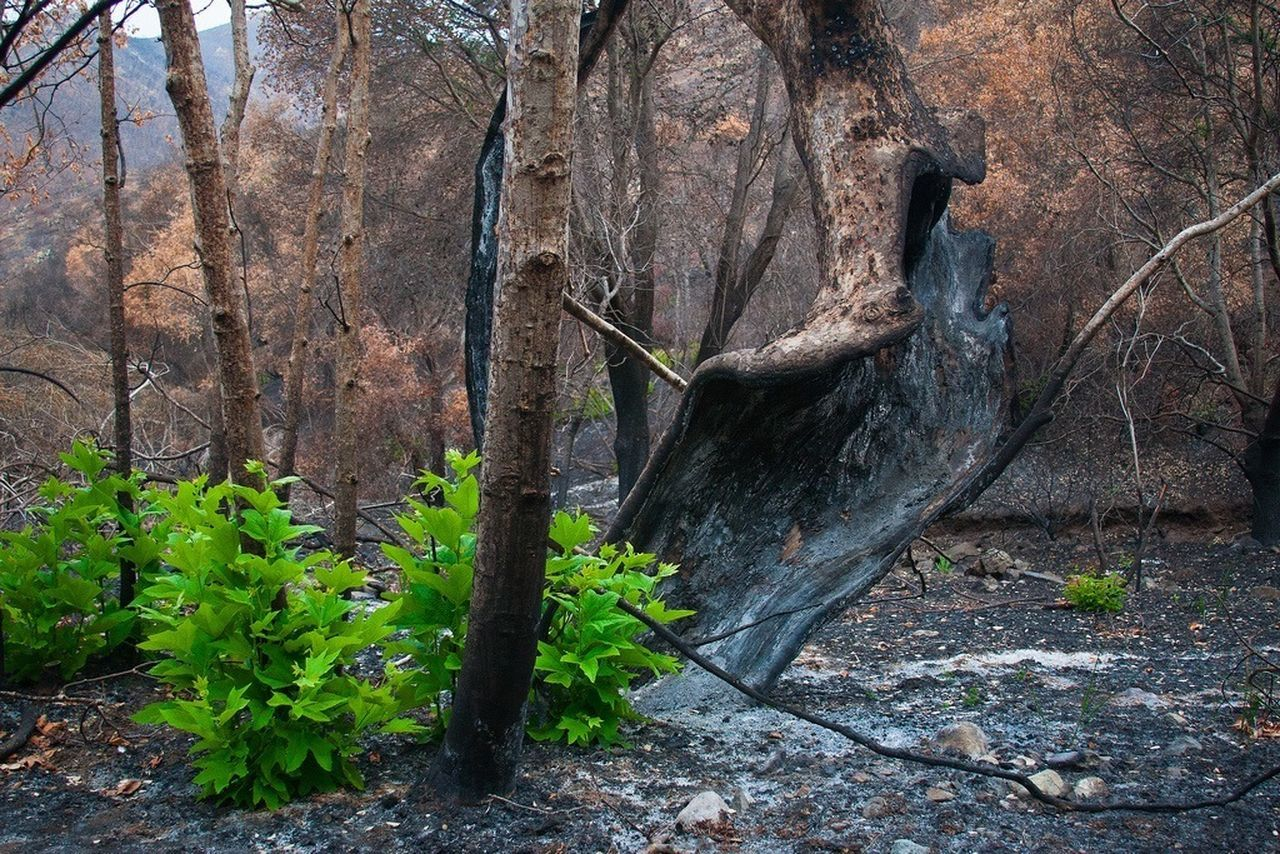 After the Springs Fire - Sycamore Canyon The Environmentalist – 2014 EyeEm Awards Santa Monica Mountains New Growth Brush Fire