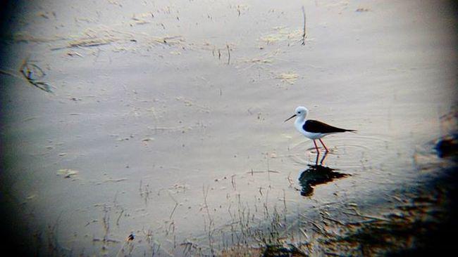 Photography is like a Bird , u one can teach u all of it pics_credit @sanyog.daya @chriansh_a_dslrian Photo Birdphoto TelescopicPic 12X_zoom NewBird Snapseed UltraHdr Igphotomagic Igers_wanderlust TruePhotolover Udaipurities UdaipurBlogs InstaUdaipir Sweetudaipur Unseenudaipur Pics_credit @sanyog.daya @chriansh_a_dslrian