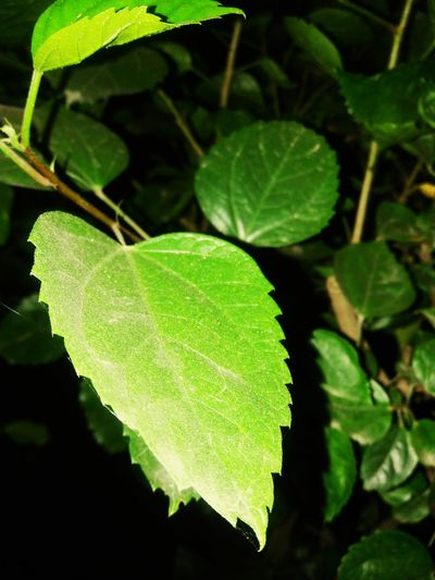 green symbol of life..... Leaf Green Color Close-up Freshness Nature Beauty In Nature Growth Outdoors Growing Green Plant Focus On Foreground No People