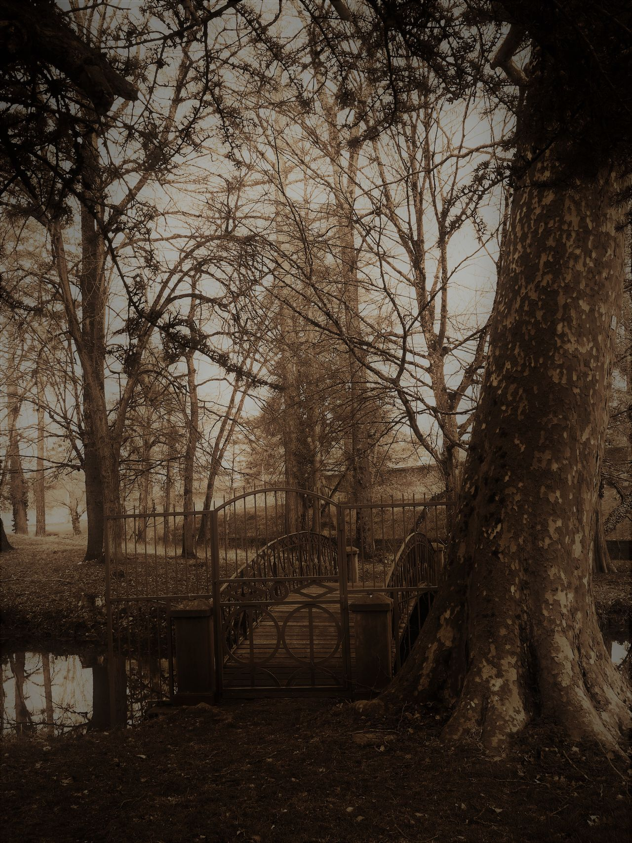 Architecture Nature No People Outdoors Parc Sepia Tranquility Tree