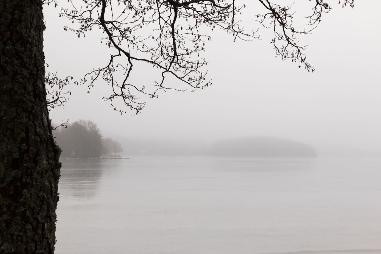 Water Nature Tranquil Scene Tranquility Beauty In Nature Tree Scenics Lake Waterfront No People Outdoors Fog Bare Tree Day Misty Foggy First Eyeem Photo Hello World Exceptional Photographs Landscape Simplicity Lake View Lakeshore Foggy Morning Misty Morning