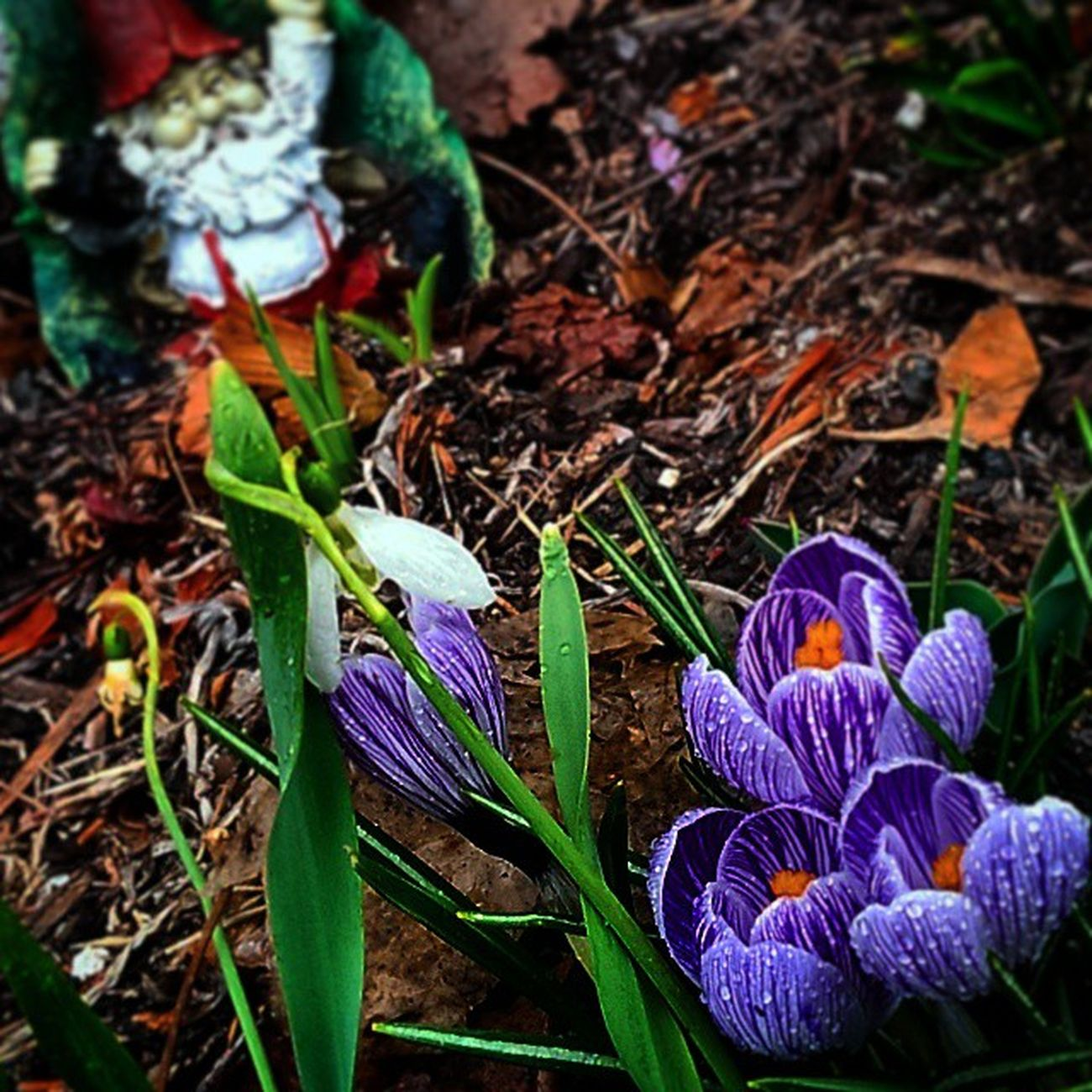 Embrace the delicate lips of spring! Igerspennsylvania Ig_pennsylvania Earthporr Spring eastcoast flowers rebirth fantasy middleearth tolkien forgottenrealms sensual gardening pinealgland thirdeye beastcoast