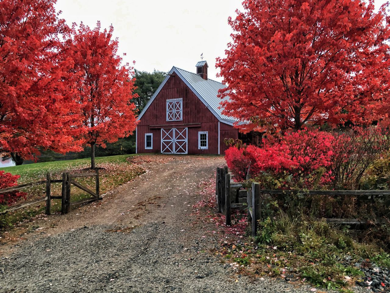 autumn, tree, house, built structure, architecture, building exterior, change, no people, day, outdoors, nature, leaf, red, beauty in nature, sky