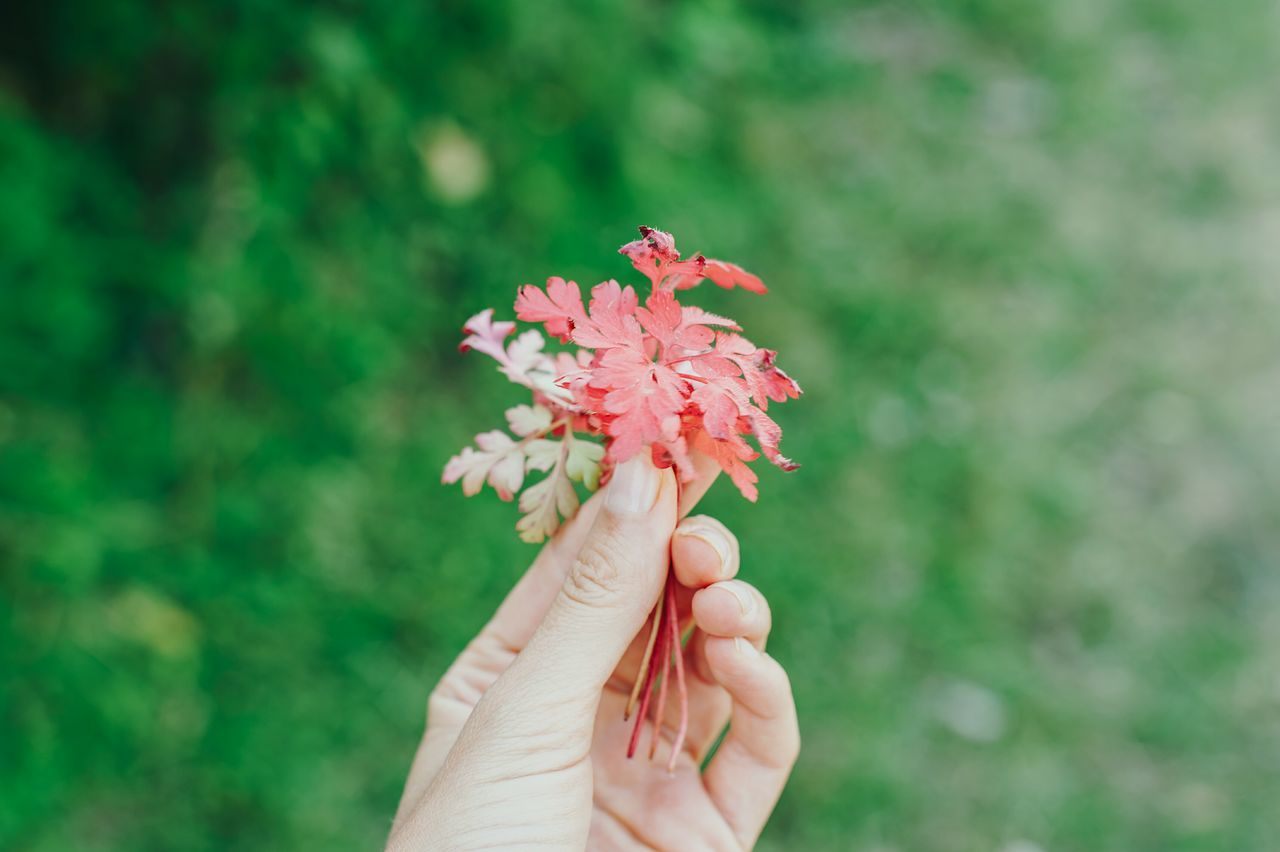 Fresh Autumn nature simple Flower Freshness Close-up Beauty In Nature Growth Red Green Color Petal Day Human Finger Botany Change Nature Holding First Eyeem Photo
