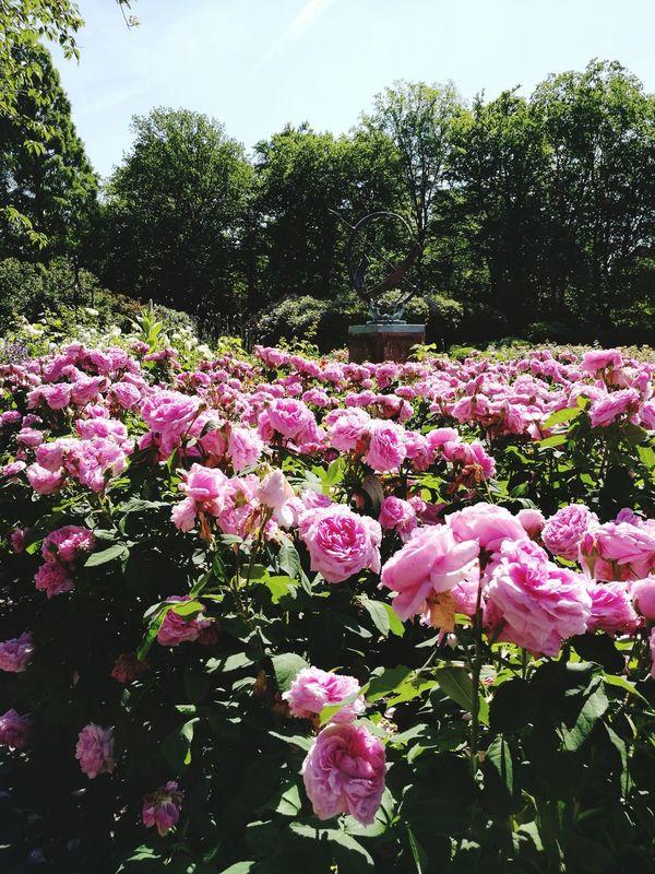 Botanik Schlossgarten Oldenburg