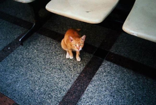 good morning? Cat Streetphotography Lomography Olympus_xa