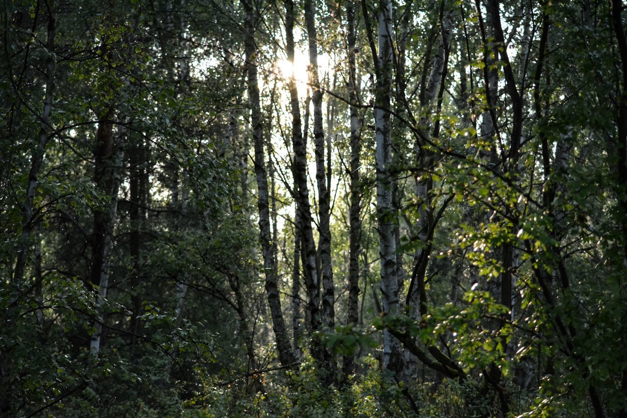 forest, tree, nature, outdoors, day, growth, no people, beauty in nature, scenics, branch