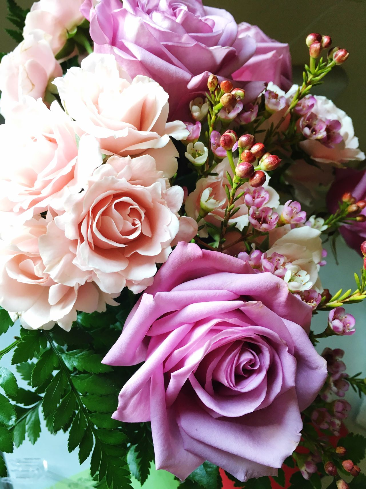 Roses Rose🌹 Pink Lilac Pastel Flowers Flower Flower Collection Flowers, Nature And Beauty Nature Nature_collection Beautiful Nature Nature Photography Naturelovers Beautiful Summer Pink Rose Birthday Birthday Flowers