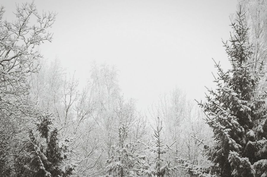 2017 Februari Niklas Björkvik Showcase February 2017 Sweden Tree Nature Branch Growth Snowing Outdoors Beauty In Nature Snowflake The Great Outdoors - 2017 EyeEm Awards BYOPaper! The Week On EyeEm Perspectives On Nature Shades Of Winter
