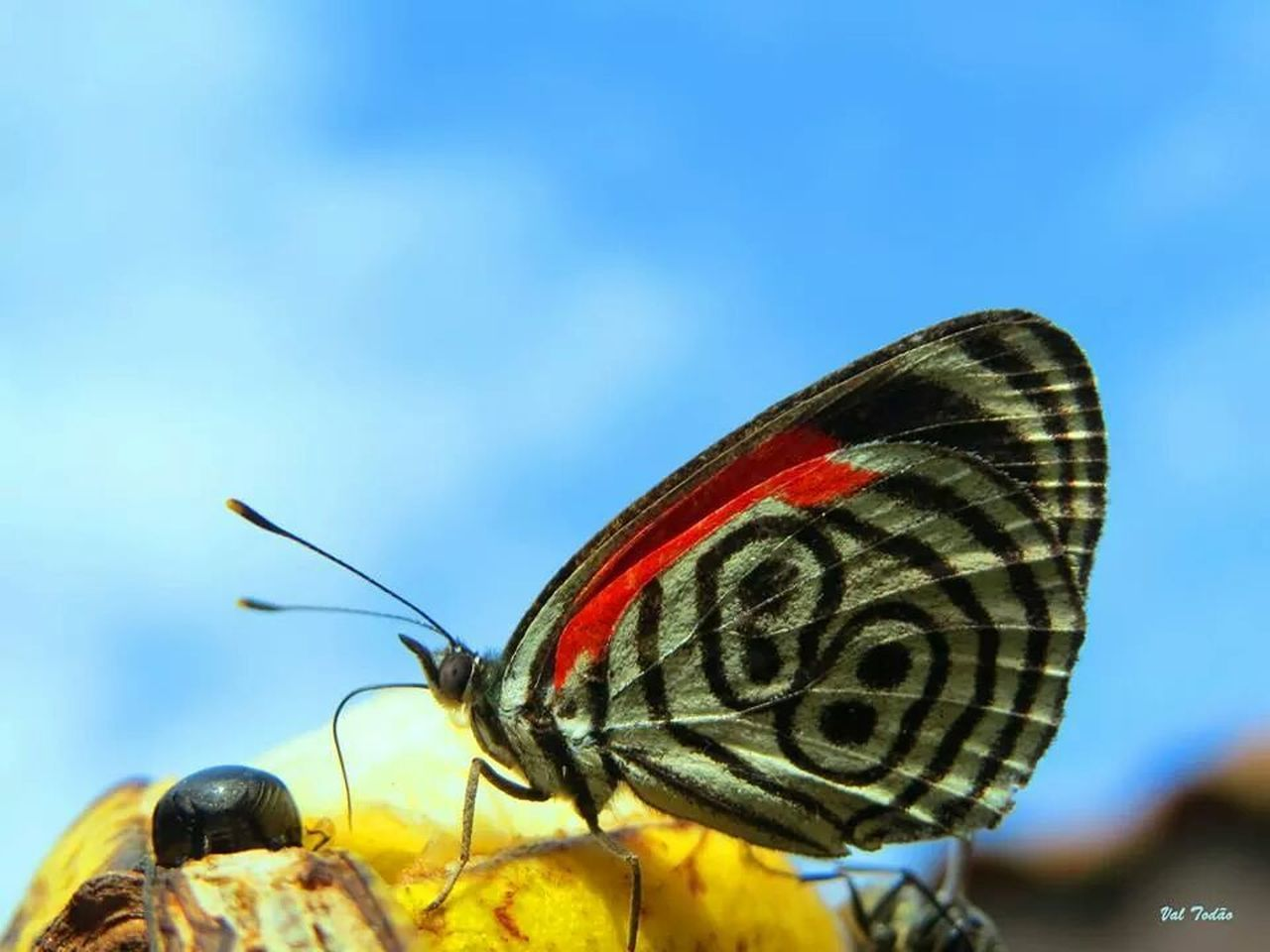 insect, animal themes, one animal, animals in the wild, close-up, no people, focus on foreground, animal wildlife, butterfly - insect, outdoors, day, animal markings, nature