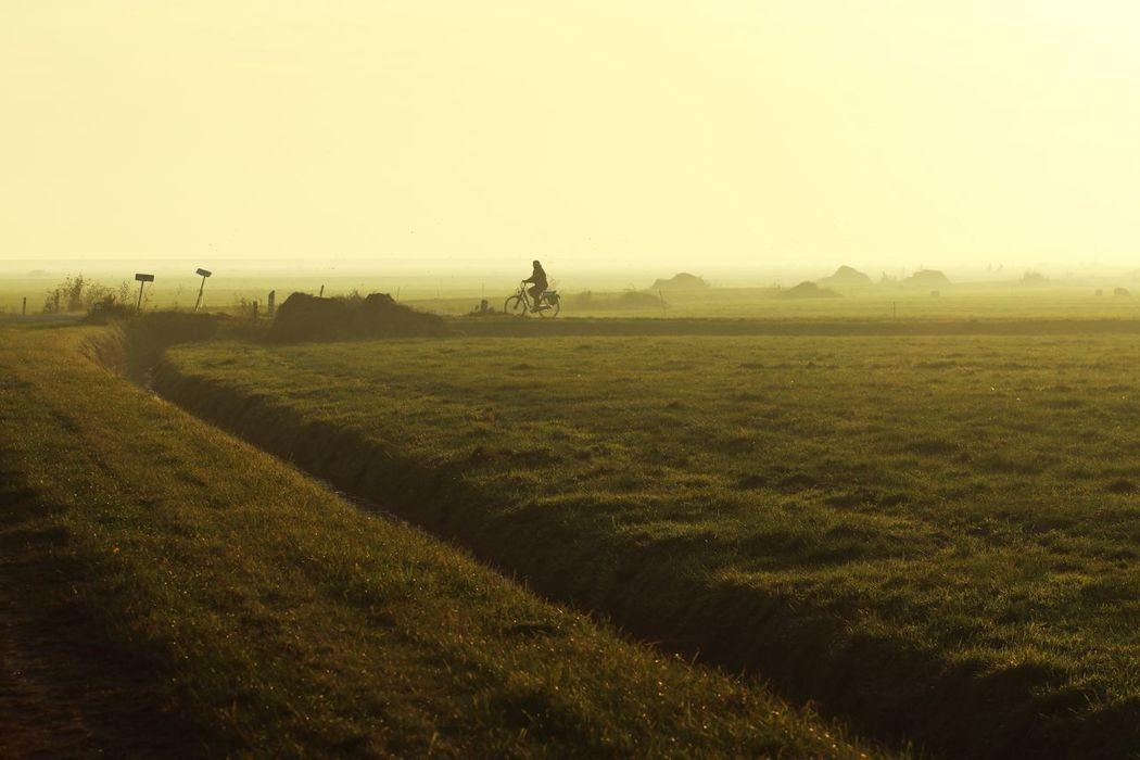 Dutch Light Dutch Landscape Bicycle Countryside Cycling Sunlight Grassland Summer Backlit Backlight Golden Hour Golden Single Person Meadows