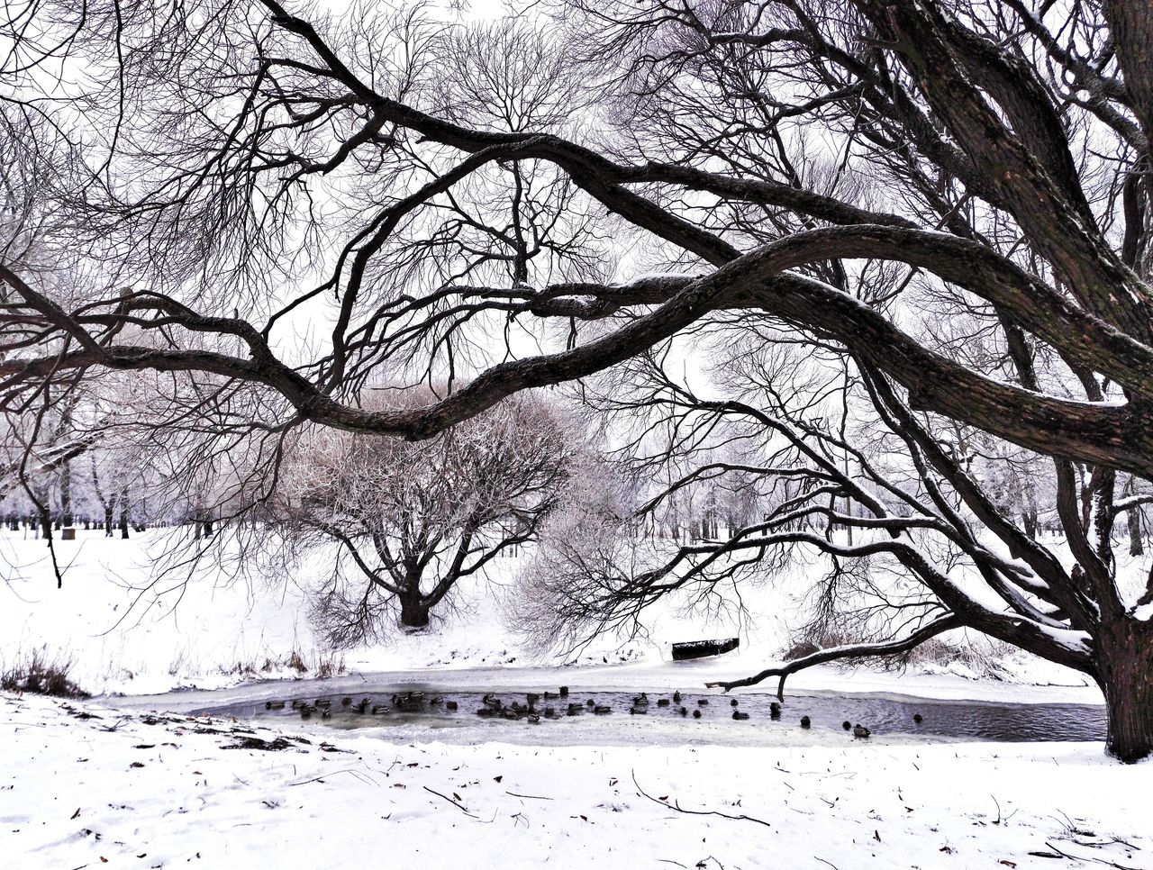 Tree Nature Day Beauty In Nature Tranquility Bare Tree Hello World Enjoying Life City Black And White Beauty In Nature Cityscape Weather Cold Temperature Ducks In Water Snow Water_collection