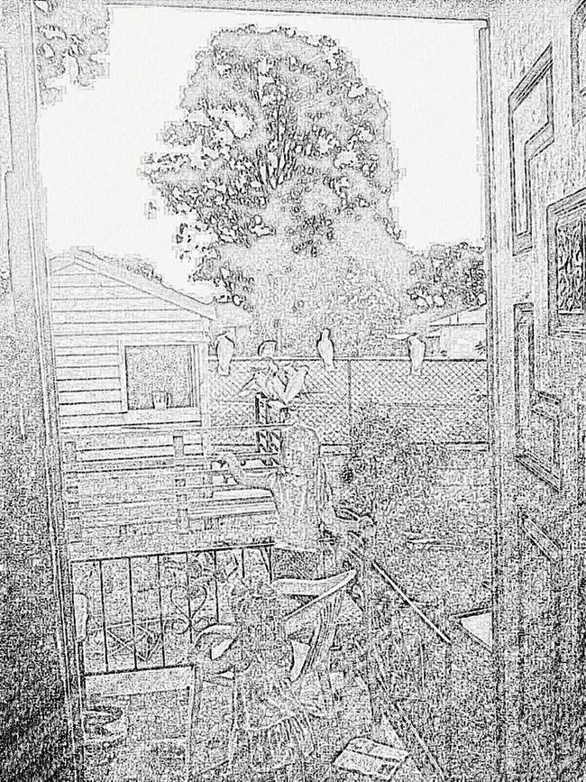 Sketch Art Birds EyeEm Kids Kids Being Kids Cubby House