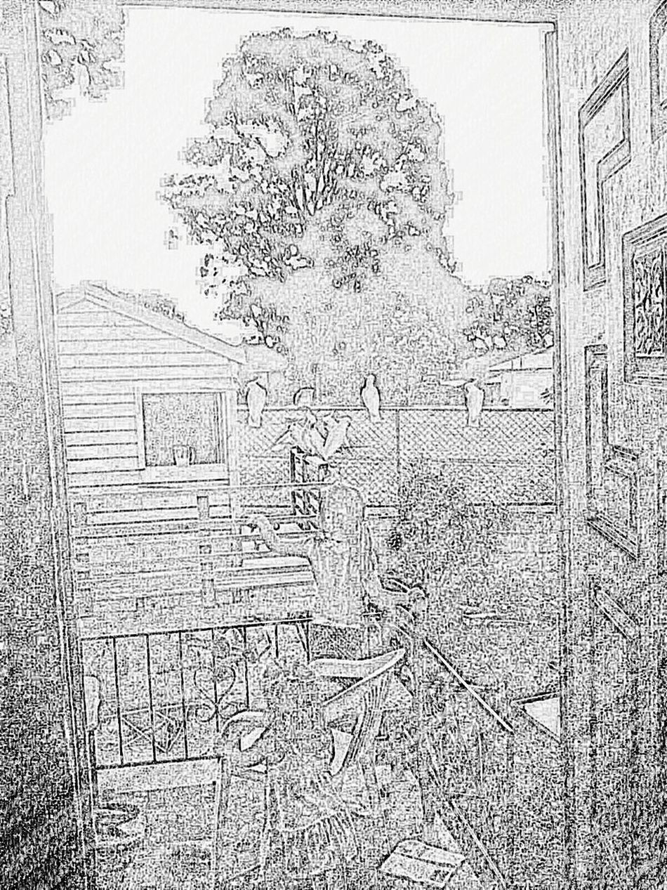 Sketch Art Birds EyeEm Kids Kids Being Kids Cubby House