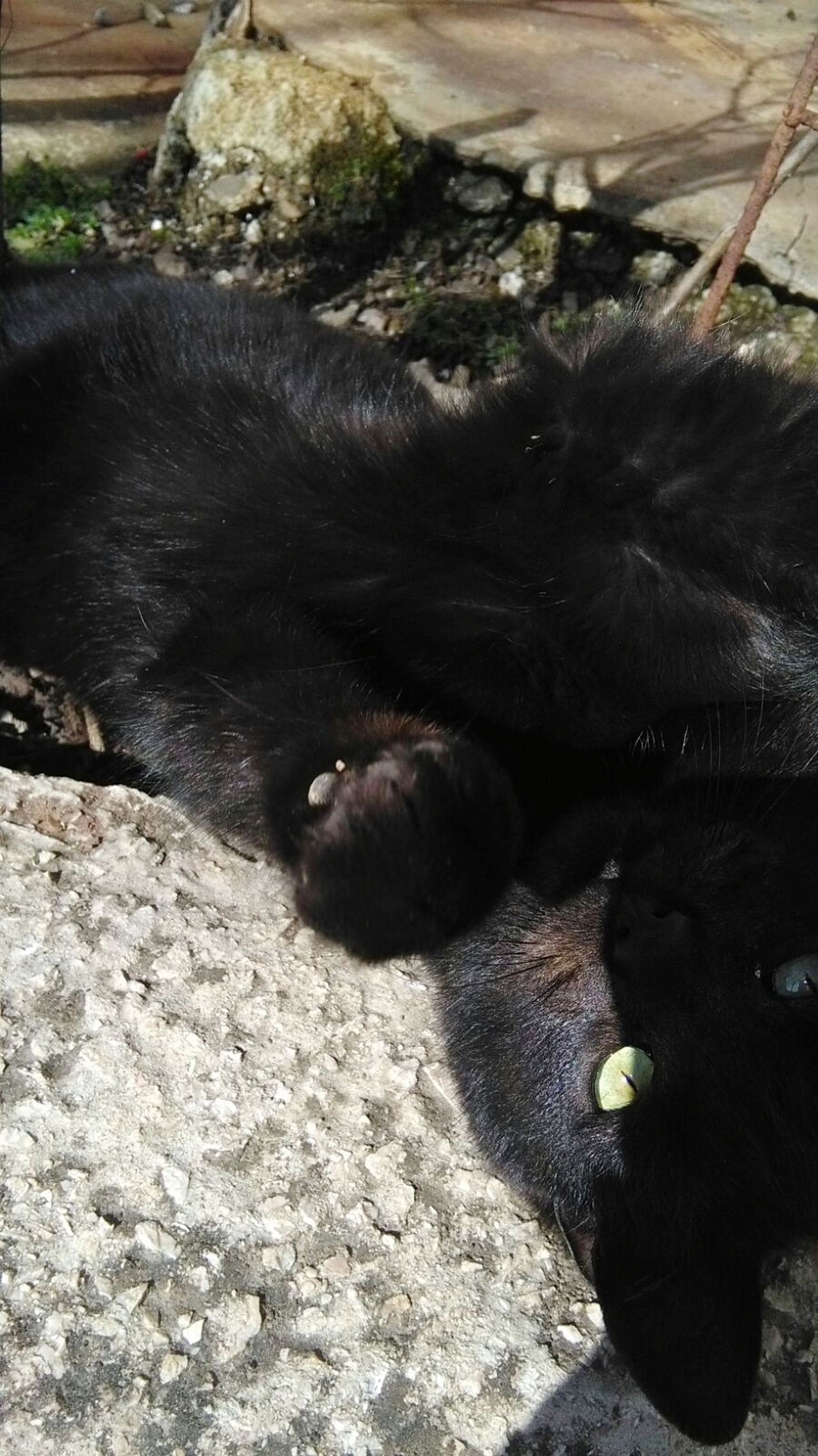 Black Cat Black Cat Photography Black Cats Black Cat Love Black Cat Curling Cat Cat Lovers Cats Of EyeEm Cat Eyes