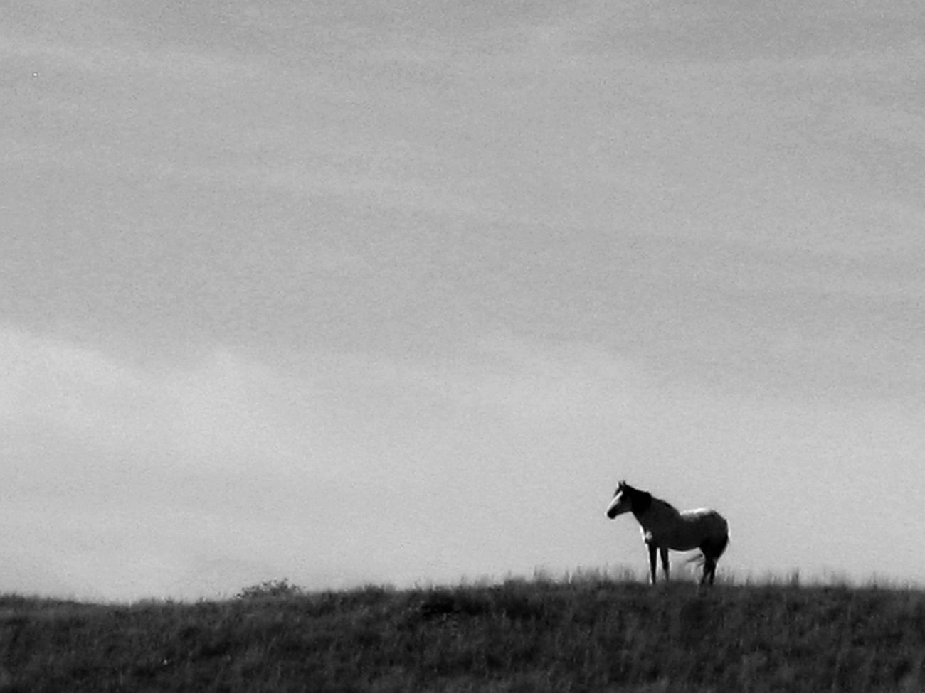 Keeping Watch Blackandwhite Getting Away From It All Horse Keeping Watch Single Object Standing Watching Wild Horse America Wild West