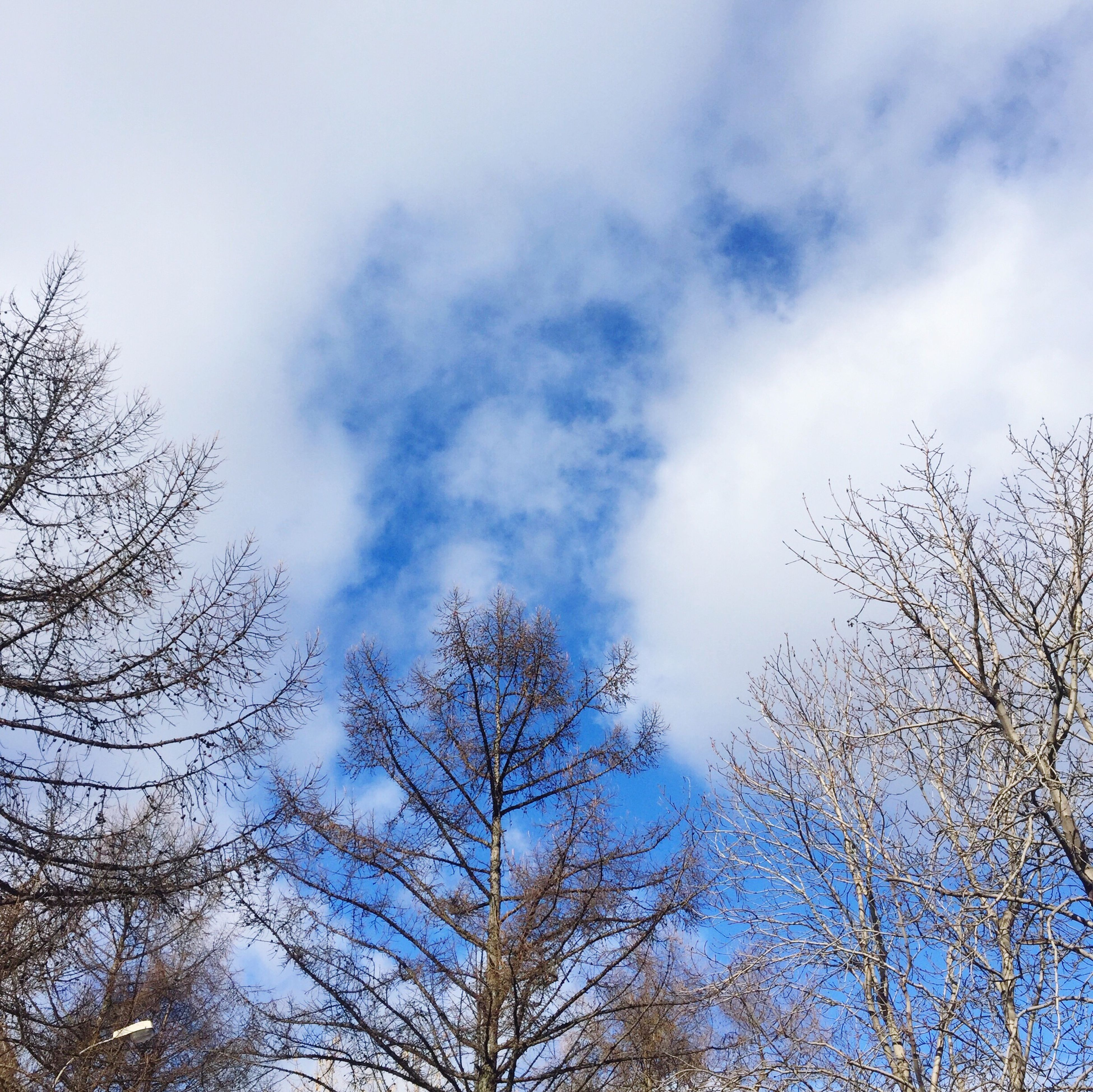 sky, tree, low angle view, nature, growth, no people, cloud - sky, beauty in nature, outdoors, day, tranquility, branch