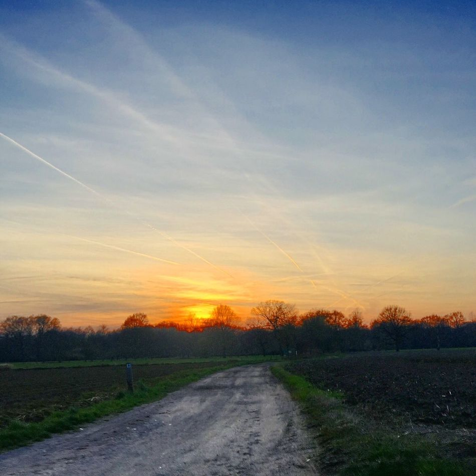 Sunset road Tree The Way Forward Nature Scenics Sky Road Tranquility Tranquil Scene Landscape Beauty In Nature No People Sunset Field Outdoors Rural Scene Day