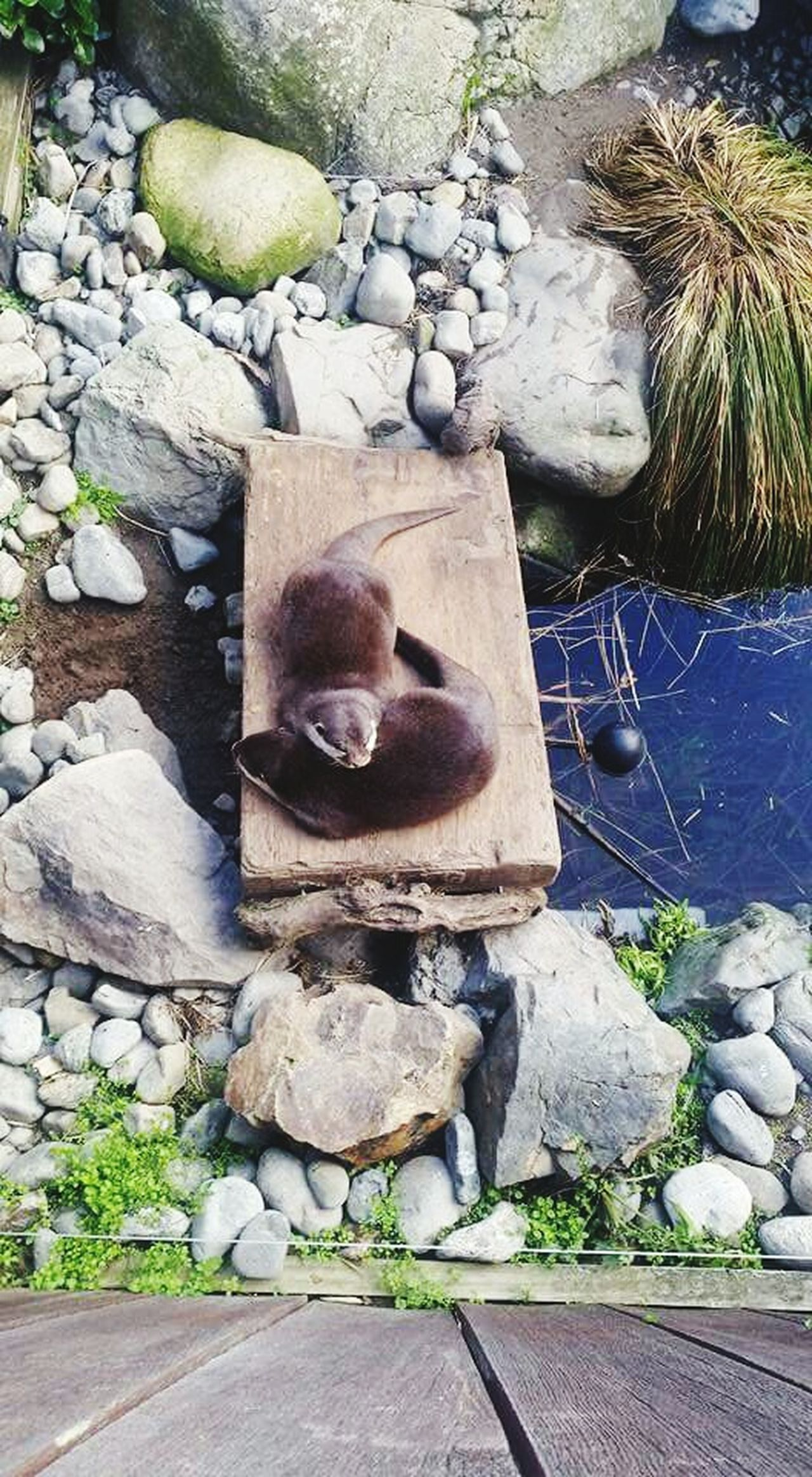 Two otters 😍 Otters Nature Tree Cuddling Beauty In Nature Outdoors Zoo Zoo Animals  Close-up Mobile Photography Cuteness