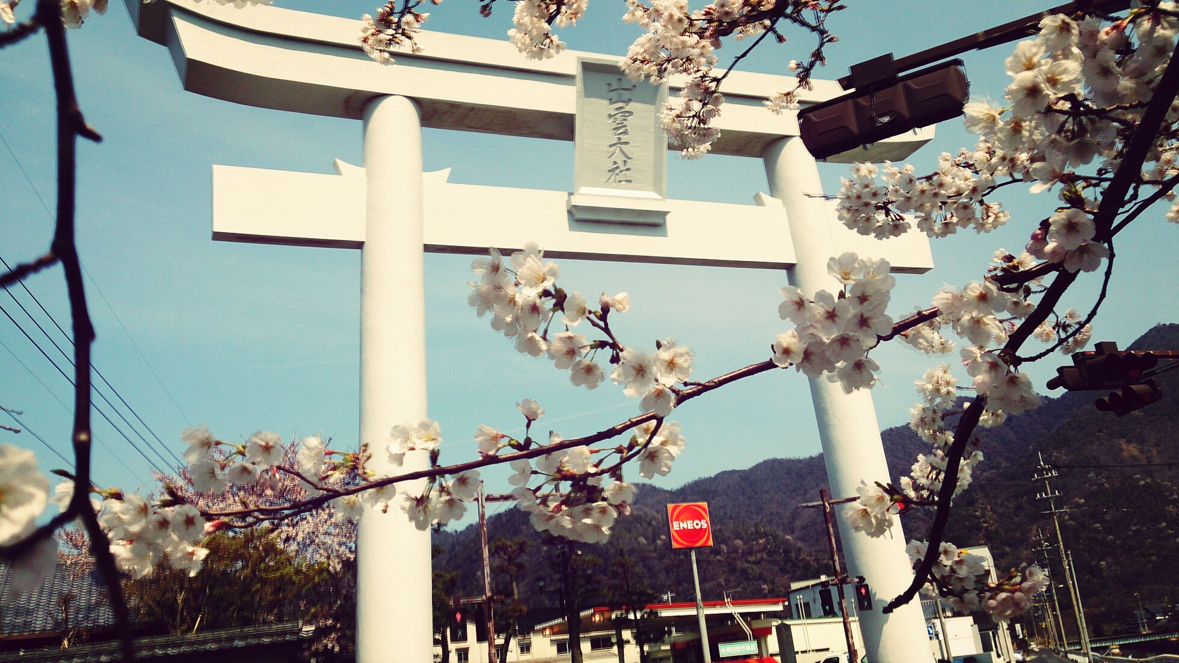 low angle view, tree, flower, branch, building exterior, built structure, architecture, hanging, city, growth, freshness, day, clear sky, outdoors, cherry blossom, sky, street light, cherry tree, no people, nature
