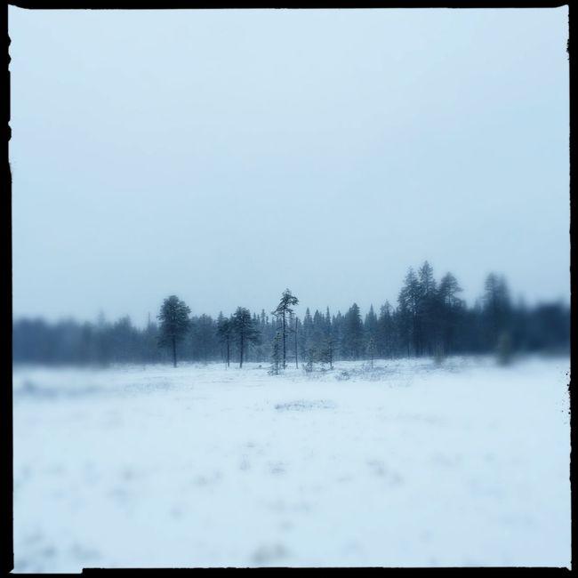Silence ❄️💙❄️ Taking Photos Tadaa Community EyeEm Nature Lover Trees TreePorn It's Cold Outside