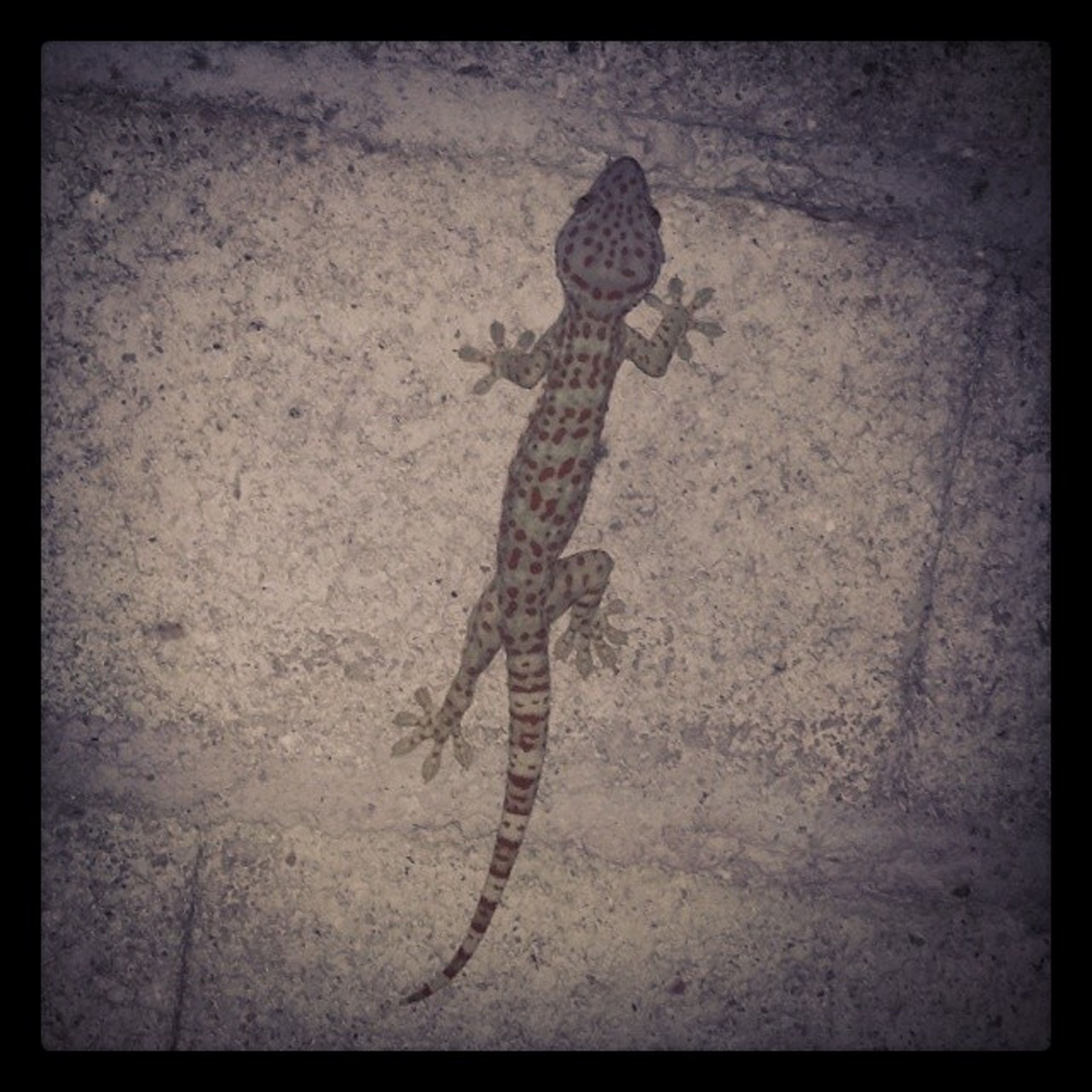 animal themes, one animal, transfer print, auto post production filter, wildlife, animals in the wild, high angle view, wall - building feature, street, full length, shadow, lizard, day, outdoors, no people, wall, sunlight, textured, vignette, close-up