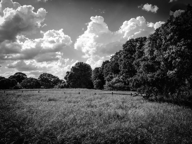 Landscape_photography Landscape_Collection Monochrome MonochromePhotography Black And White Collection  Black & White Tree_collection  Sky And Clouds Fieldscape Field Field Of Dreams The Great Outdoors - 2016 EyeEm Awards Storm Clouds in Roseville, CA Clouds And Trees