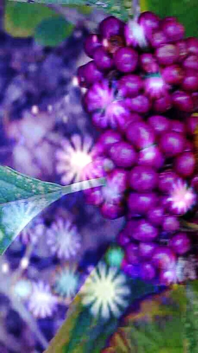 Bokeh Photography Bokeheffect Bokehlicious Wild Berries Flower Photography Flowers, Nature And Beauty Enjoying My World In My Backyard